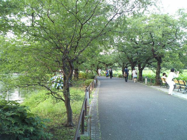 Shinobazu08.jpg