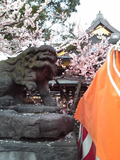 yushima_koma2.jpg