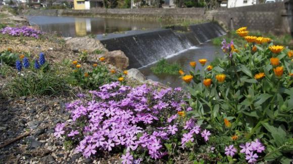 川沿いの花壇の花