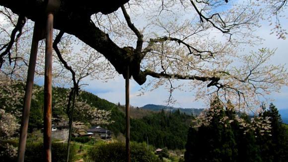 山里風景と醍醐桜