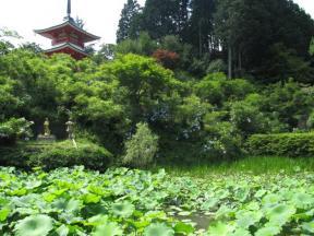 蓮池と多宝塔