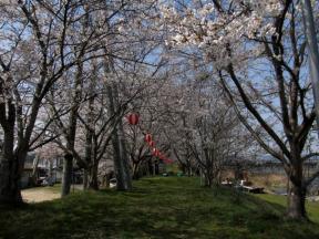 桜並木入口から