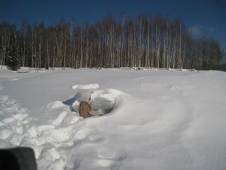 五の沢河口キノコ氷