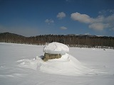 糠平湖東岸キノコ氷1