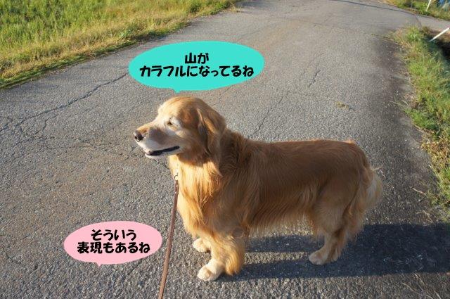 DSC02626.jpg