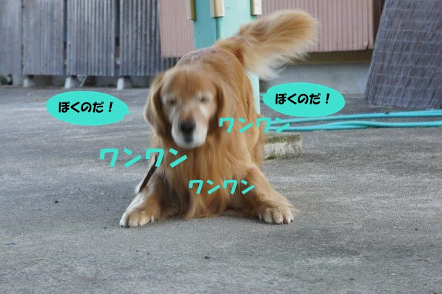 DSC02751.jpg