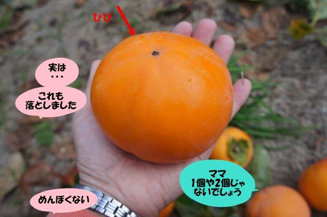 DSC02772.jpg