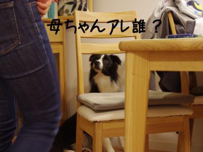 にゃんこ襲来04.12/12/03
