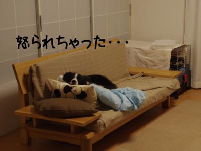 にゃんこ襲来06.12/12/03