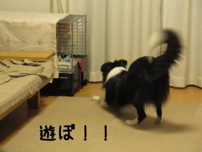 にゃんこ襲来10.12/12/03