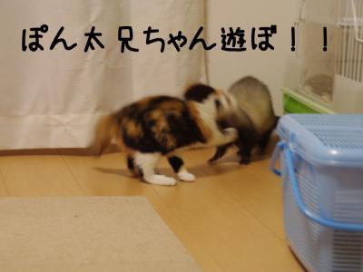 六花速し01.12/12/11