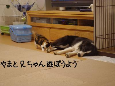 講習会後02.12/12/19