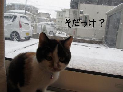 初雪体験01.13/01/14