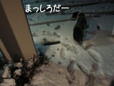 初雪体験07.13/01/14