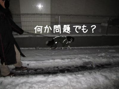 初雪体験11.13/01/14