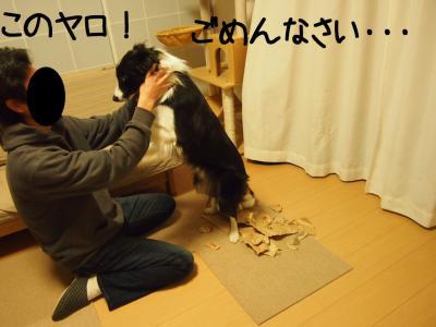 フリー留守番08.13/01/17