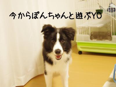 やまと×ぽん02.13/01/26