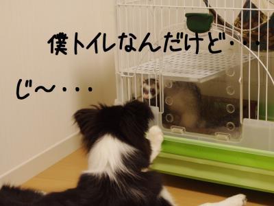 やまと×ぽん07.13/01/26
