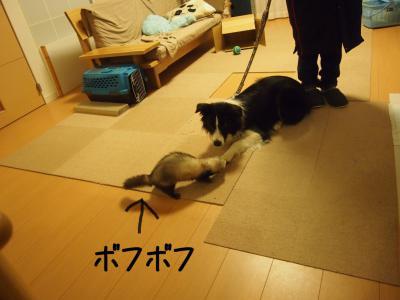 やまと×ぽん13.13/01/26