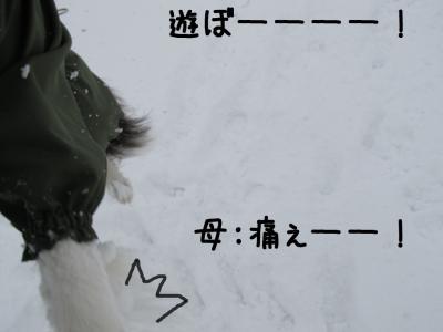 雪リターンズ12.13/01/28