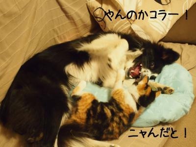 無差別級01.13/02/09