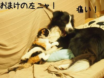 無差別級04.13/02/09