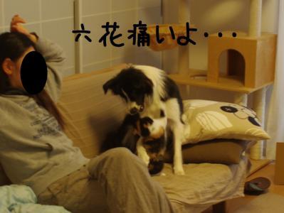 無差別級05.13/02/09
