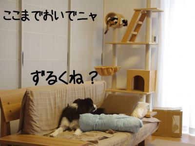 無差別級08.13/02/09