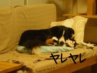 無差別級11.13/02/09