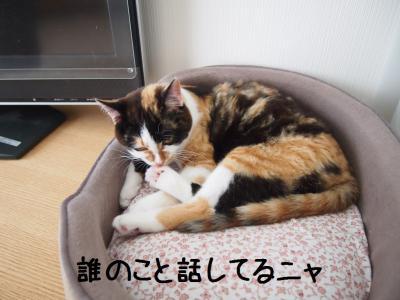 六花おしとやか01.13/04/06