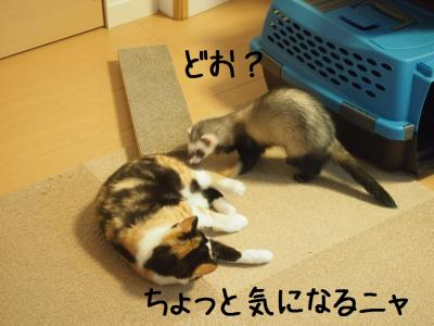 避妊03.13/04/14