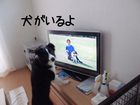 ディスクDVD鑑賞02.12/07/29