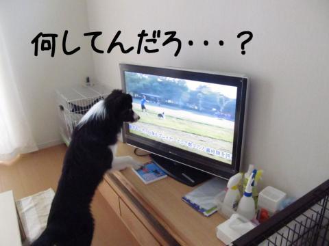ディスクDVD鑑賞03.12/07/29