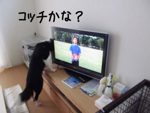 ディスクDVD鑑賞04.12/07/29