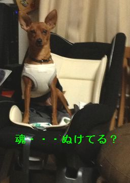 020_20121227140125.jpg
