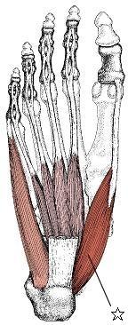 愛媛県松山市美と健康の整体サロン彩色健美 不妊・更年期・膝痛・腰痛に!オーダーメイドインソール「足つぼ足底板」と大人気美容整体!