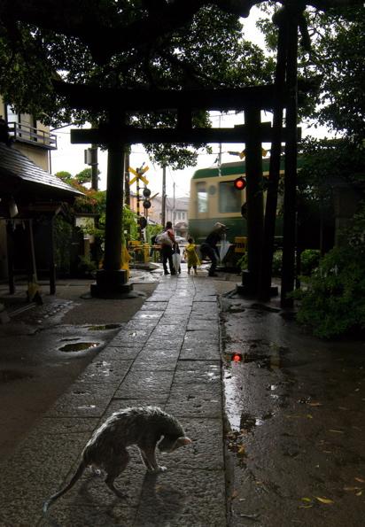 雨猫神社2