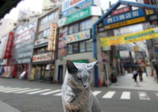 家出猫12