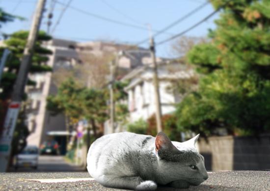 家出猫11