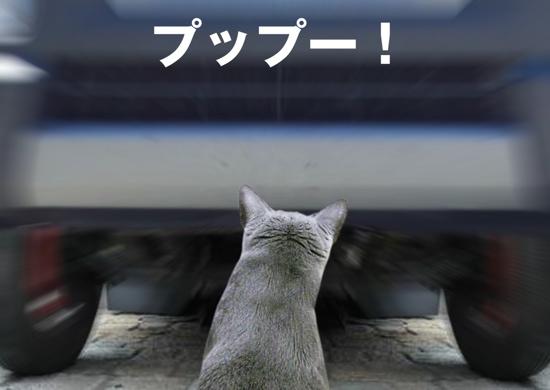 家出猫10