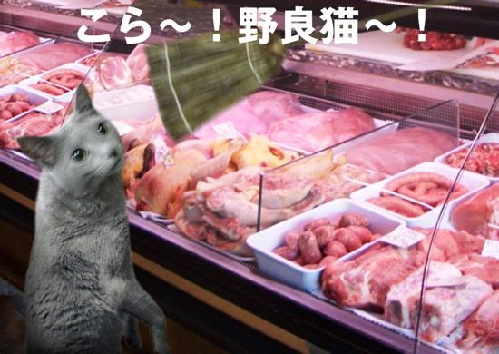 家出猫17