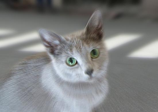 家出猫15