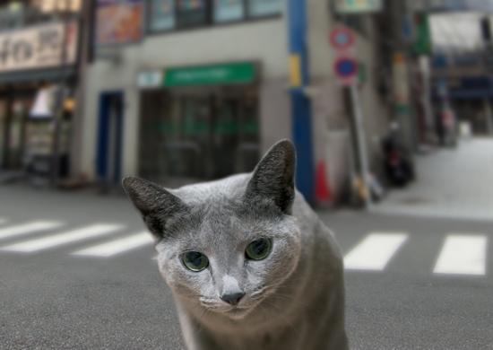 家出猫13