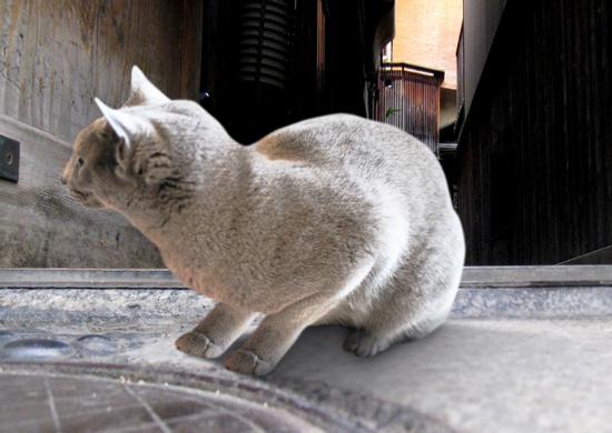 家出猫24