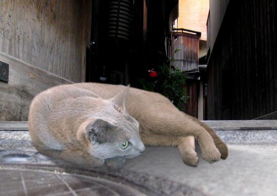 家出猫23