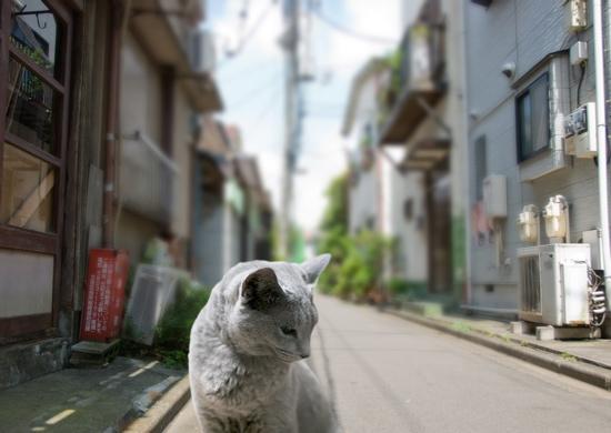 家出猫19