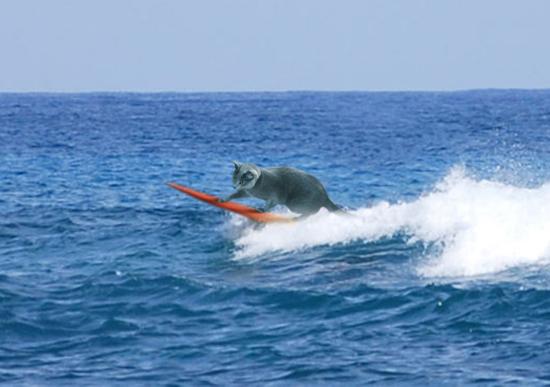 サーフィンみどり1