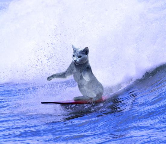サーフィンみどり2