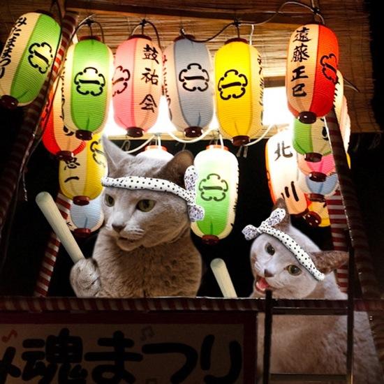 盆踊り猫1