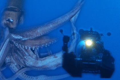 NHKスペシャルの『巨大イカ』が映画化決定! イカちゃんの時代がきてる